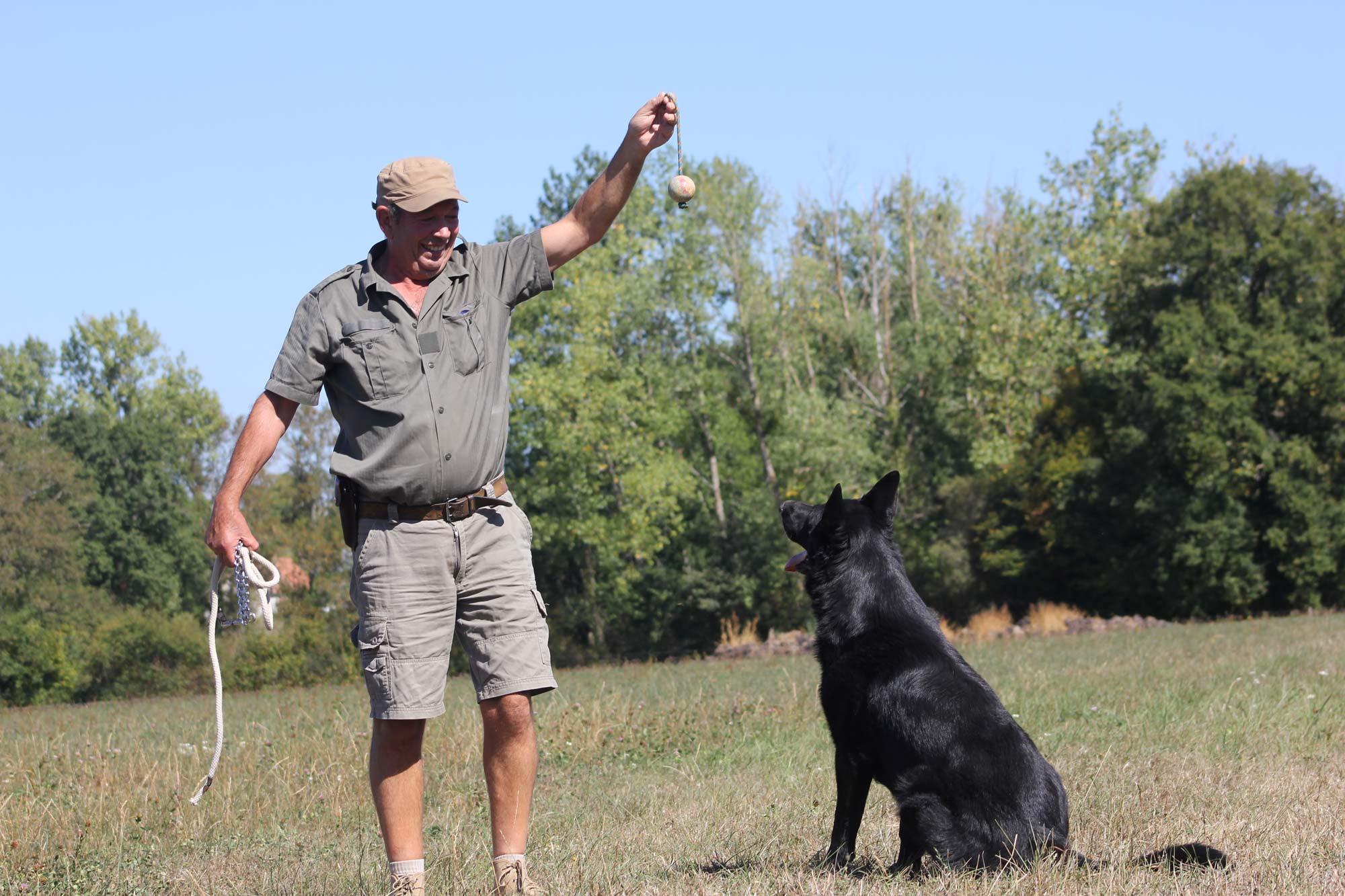 dressage d'un berger allemand au centre canin